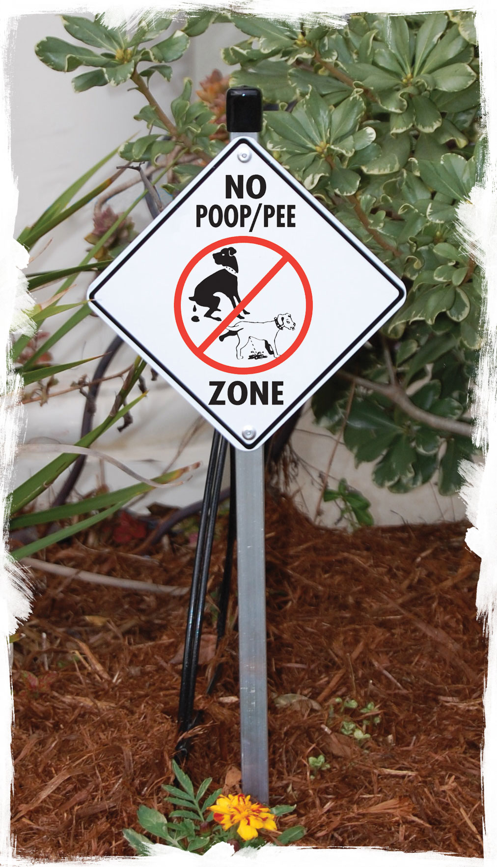 No Dog Poop And Pee Zone Aluminum Dog Poop Signs And Sticker