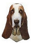 Basset Hound Stickers