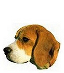 Beagle Stickers