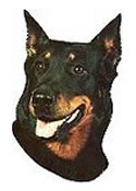 Beauceron Stickers