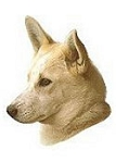 Canaan Dog Stickers