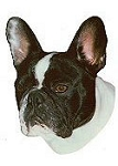 Frenchie Stickers