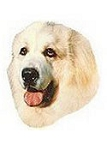 Great Pyrenees Stickers