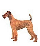 Irish Terrier Stickers