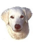 Kuvasz Stickers