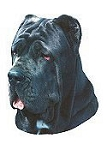 Neapolitan Mastiff Stickers