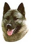 Norwegian Elkhound Stickers