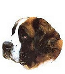 Saint Bernard Stickers