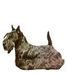 Scottish Terrier Stickers