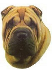 Shar Pei Stickers