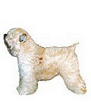 Soft Coated Wheaten Terrier Stickers