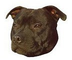 Black Staffordshire Bull Terrier Stickers