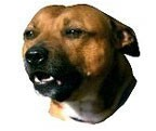Staffordshire Bull Terrier Stickers