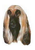 Afghan Hound Full Color Vinyl Sticker