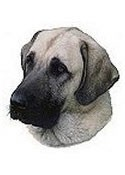 Anatolian Shepherd Full Color Vinyl Sticker