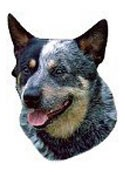 Australian Cattle Dog Full Color Vinyl Sticker