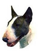 Bull Terrier Full Color Vinyl Sticker