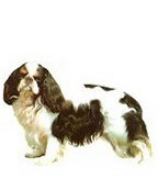 Cavalier King Charles Full Color Vinyl Sticker