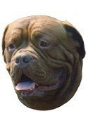 Dogue De Bordeaux Full Color Vinyl Sticker