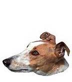 Greyhound Stickers