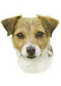Jack Russell Terrier Full Color Vinyl Sticker