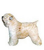 Soft Coated Wheaten Terrier Full Color Vinyl Sticker