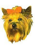 Yorkshire Terrier Full Color Vinyl Sticker